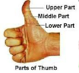 Thumb Size